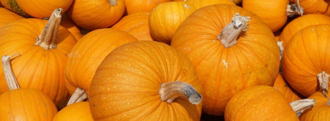 Właściwości dyni - dlaczego warto sięgnąć po to warzywo?