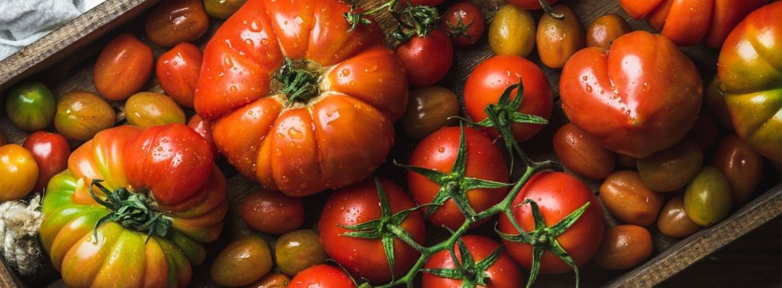 Odmiany pomidorów i ich zastosowanie
