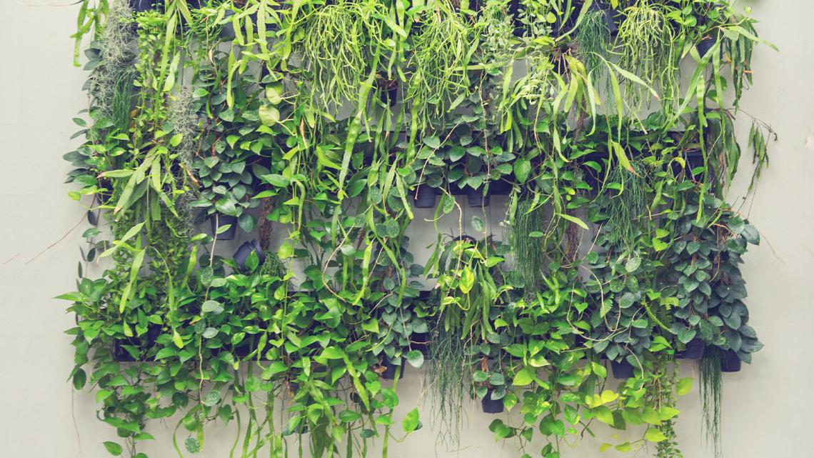 Ogród wertykalny, czyli zielona ściana z roślin w domu