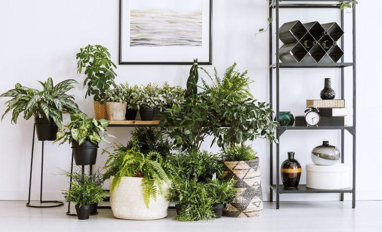 Jak zadbać o rośliny doniczkowe zimą?