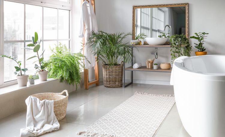 Jakie rośliny można wstawić do łazienki?