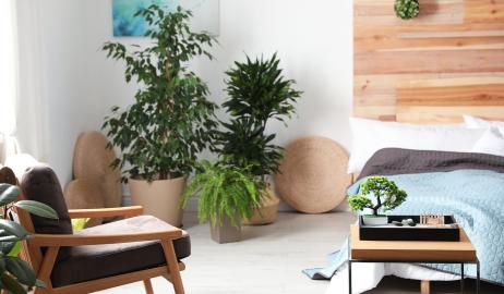 Feng shui – zadbaj o harmonię w swoim domu