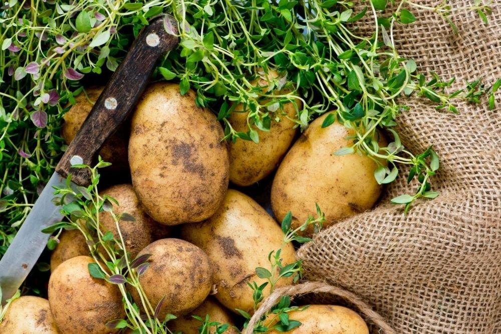 Bataty kontra ziemniaki - które wybrać? - zdjęcie 1