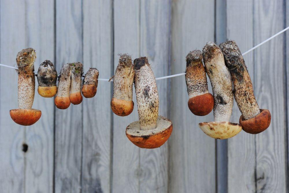 Jak suszyć grzyby – krok po kroku - zdjęcie 1