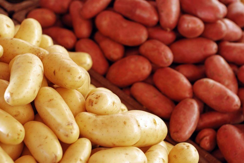 Kilka faktów o ziemniakach - zdjęcie 1