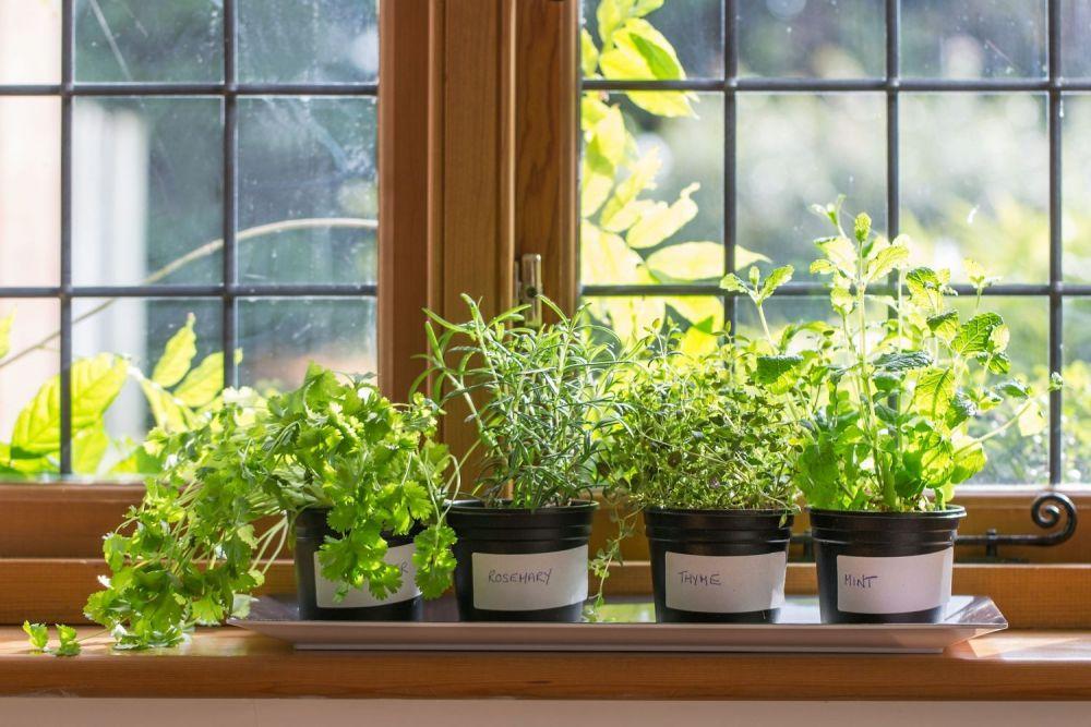 zioła, zioła na parapecie, tymianek,rozmaryn,bazylia