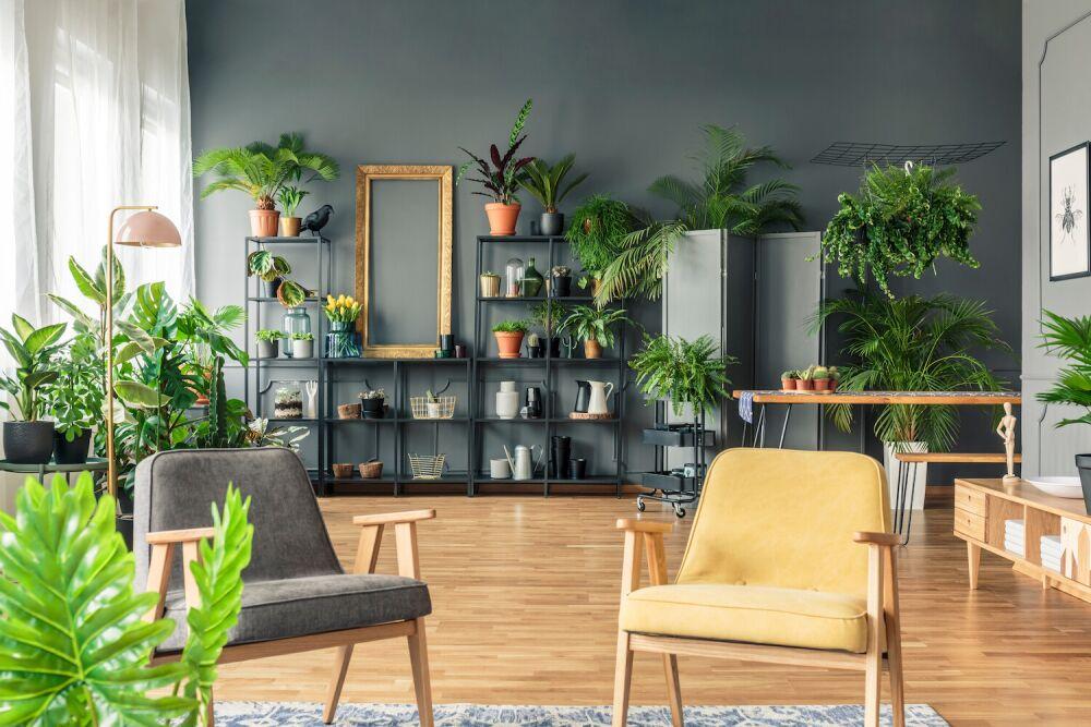 salon pełen kwiatów, mieszkanie urban jungle, fotele retro do salonu