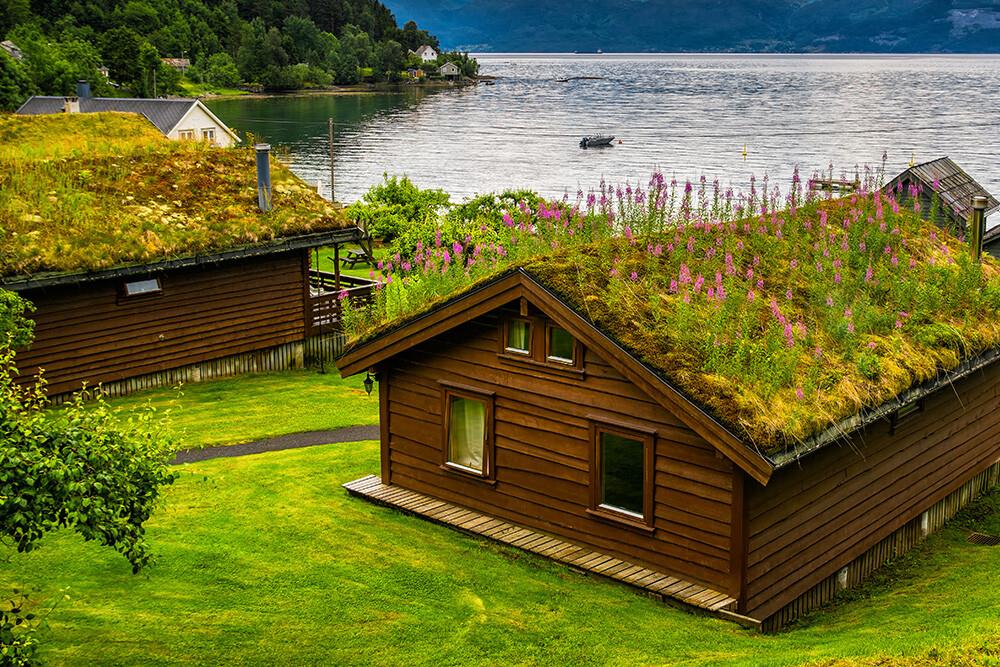 ogród na dachu domu