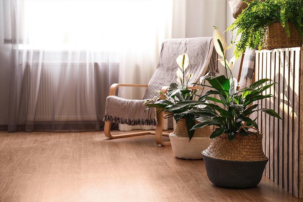 rośliny w wiklinowym koszu w salonie na podłodze
