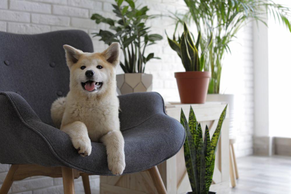 pies na fotelu