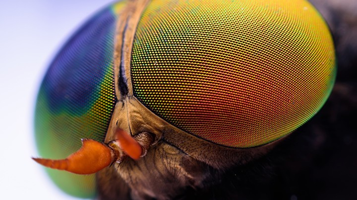 Do jego produkcji wykorzystuje się żywe larwy much i wraz z nimi jest serwowany. Casu Marzu to…