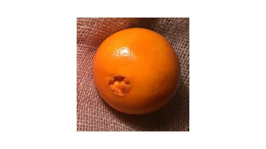 Jak rozpoznać słodkie i bezpestkowe pomarańcze