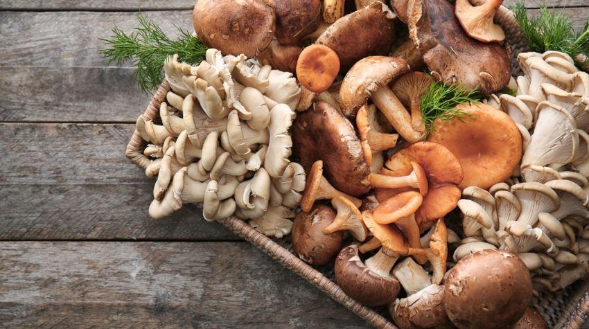 Jak poprawnie zbierać grzyby leśne?