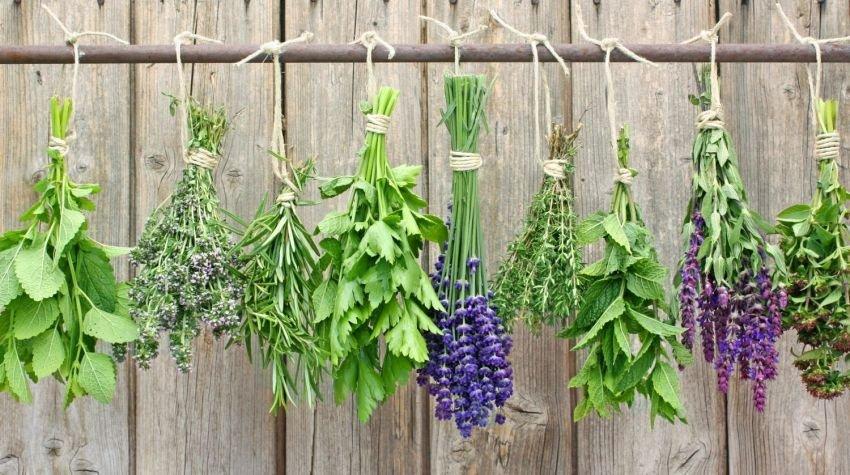 Jak suszyć zioła?